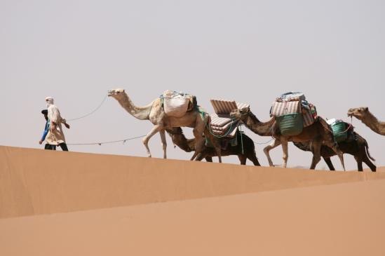 Camel Train - Sahara